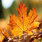 秋天好看的落叶风景头像大全